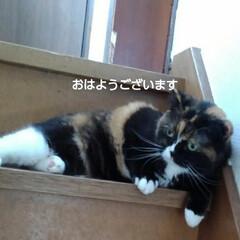 猫のいる生活/にゃんこ同好会/にゃんこ日めくり おはようございます🐱🐱 6月6日 土曜日…