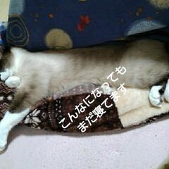 猫のいる生活 るっちゃんのお昼寝(6枚目)
