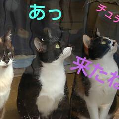 猫のいる生活/にゃんこ同好会/ねこ 今日は3️⃣ニャンズの ニャルソックが見…(3枚目)