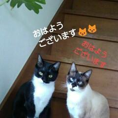 ご挨拶/猫のいる生活/にゃんこ同好会/にゃんこ日めくり おはようございます🐱🐱 4月30日 木曜…