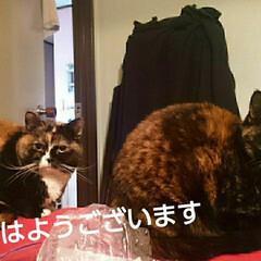 猫の気持ち/猫のいる生活/にゃんこ日めくり おはようございます 5月12日 火曜日で…