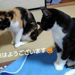 姉弟猫/にゃんこ同好会/にゃんこ日めくり おはようございます🐱 2月8日 土曜日 …