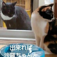 猫の気持ち/猫のいる柄が/にゃんこ日めくり おはようございます 5月11日 月曜日で…(5枚目)