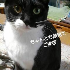 白黒猫/にゃんこ同好会/にゃんこ日めくり おはようございます🐱 今日は1月21日 …(2枚目)
