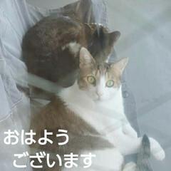 猫のいる生活/にゃんこ同好会/にゃんこ日めくり おはようございます(こんにちわ) 5月2…