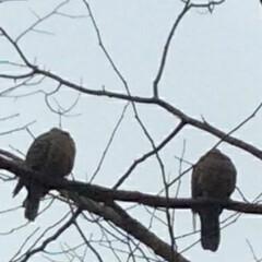 風景 昨日の寒い午後見かけた仲良しカップル も…(2枚目)