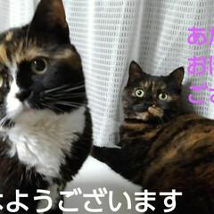 猫でいる暮らし/にゃんこ日めくり おはようございます🐱🐱 我が家(サラルー…