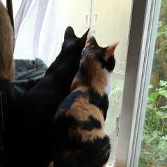 三姉弟猫/仲良し/猫派/フォロー大歓迎/LIMIAペット同好会/にゃんこ同好会 あたしも見る 見る 一緒に見る~🐱🐱🐱