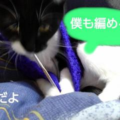 白黒猫 編み物する紗夢