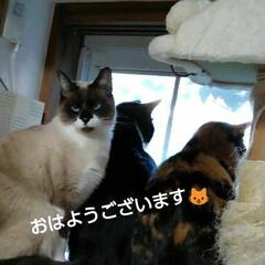 にゃんこ日めくり/にゃんこ同好会/見張り隊/三姉弟猫 おはようございます🐱 2月9日 日曜日の…
