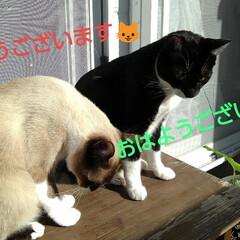 ご挨拶/姉弟猫/ベランダ おはようございます🐱  雀さんがご機嫌に…