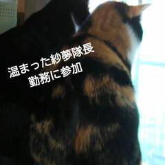 仲良し/三毛猫/白黒猫/にゃんこ同好会/見張り隊/フォロー大歓迎/... 紗夢、見張り隊、加わる
