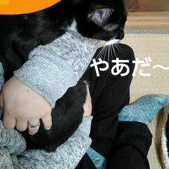 にゃんこ同好会 抱っこしたい人 抱っこされたくない猫様 …(2枚目)