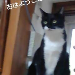 白黒猫/猫のいる生活/にゃんこ日めくり おはようございます 6月28日 日曜日で…
