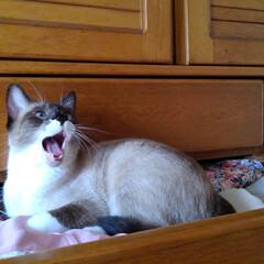 猫/LIMIAペット同好会/にゃんこ同好会/夏のお気に入り/写真 今日も暑い一日です 瑠月は私の片付けのお…(3枚目)