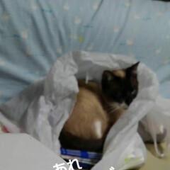 猫のいる暮らし/姉妹猫/にゃ~同好会 昨日の瑠月と紗羅
