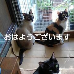 にゃんこ同好会/にゃんこ日めくり/猫のいる暮らし おはようございます 8月19日 水曜日 …