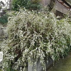 春の花 お出かけ先の春の花(5枚目)