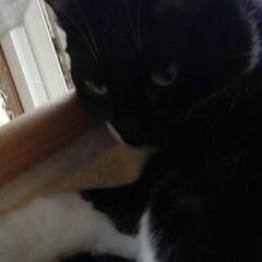 猫のいる生活 紗夢はキャットタワーでお昼寝 (2枚目)