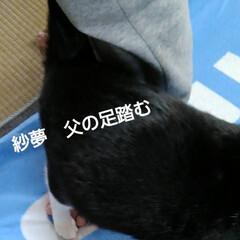 にゃんこ同好会/白黒猫 紗夢の面白い癖  前にも紹介したが 紗夢…