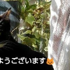 にゃんこ日めくり/にゃんこ同好会/三姉弟猫 おはようございます🐱😻😻 冬だから当たり…
