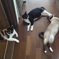 猫のいる生活 どこからも風が入る涼しい廊下 クーラーの…