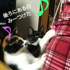 三毛猫/白黒猫/にゃんこ同好会/猫/姉弟 まゆだむのオモチャ