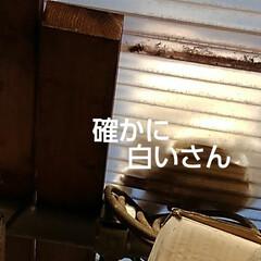 猫のいる生活/にゃんこ同好会/ねこ 今日は3️⃣ニャンズの ニャルソックが見…(7枚目)