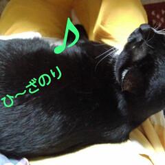 白黒猫/フォロー大歓迎 座ると直ぐに膝とり決戦 紗夢が膝獲得 チ…