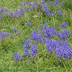 風景/花のある生活 お散歩してたらもう初夏並みの 景色になっ…(6枚目)