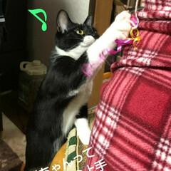 三毛猫/白黒猫/にゃんこ同好会/猫/姉弟 まゆだむのオモチャ(3枚目)