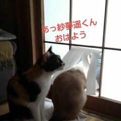 猫/姉妹/フォロー大歓迎 まだ朝早い頃 縁側で寝ている紗夢遥君と …