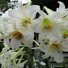 風景/花/畑/フォロー大歓迎/LIMIAおでかけ部/おでかけワンショット 畑の虫と花🌸  1枚目  グリーンの綺麗…(2枚目)