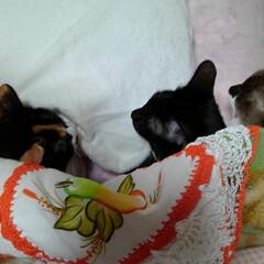 猫のいる生活/にゃんこ同好会/にゃんこ日めくり おはようございます 11月11日 水曜日…