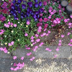 花のあるくらし/お出かけ 昨日のお出かけで見た花