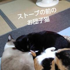 リミアペット同好会/仲良し/ストーブ/三姉弟/リミアの冬暮らし ストーブの前のお団子猫