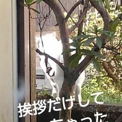 にゃんこ同好会/にゃんこ日めくり おはようございます🙀 3月26日 木曜日…(3枚目)