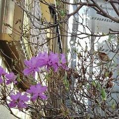 春 春の庭(7枚目)