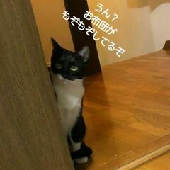 猫/三姉弟 紗夢がじっと見てます 何がいるのかな?