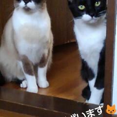 姉弟猫/にゃんこ同好会/にゃんこ日めくり おはようございます🐱 今日もいい天気です…