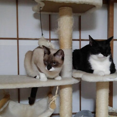 猫/姉弟/フォロー大歓迎 昨日の夜の事 瑠月と紗夢が 仲良く並んで…(4枚目)