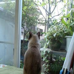 猫/シャム/フォロー大歓迎/ここが好き お早うございます🐱 るっちゃんの日曜日 …