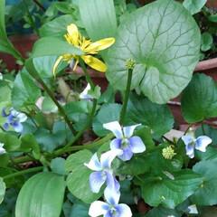 春 春の庭(1枚目)