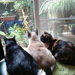 猫のいる生活/にゃんこ同好会 いつもの朝の見張り隊スタイル      …