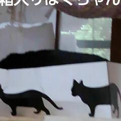 猫のいる生活 昨日の事 三匹が交代で箱入りさんしてました