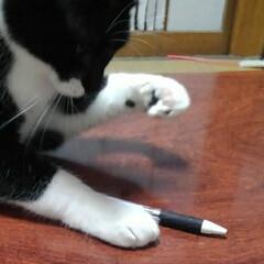 白黒猫/猫のいる生活/にゃんこ同好会/にゃんこ日めくり おはようございます 雪の朝です 予想通り…(6枚目)