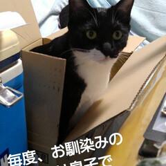 猫のいる生活/ねこ/にゃんこ同好会 毎度、 お馴染みの箱入り息子&娘  飽き…(1枚目)