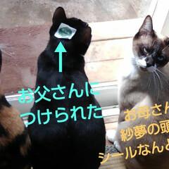 猫のいる生活/にゃんこ同好会/ねこ 今日は3️⃣ニャンズの ニャルソックが見…(2枚目)