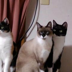 猫のいる生活/にゃんこ同好会 こんにちは 温かい日曜日 11月22日で…