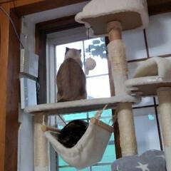 三毛猫/シャム猫/ここが好き 今日も寒い朝です 瑠月と紗羅がお役目当番…